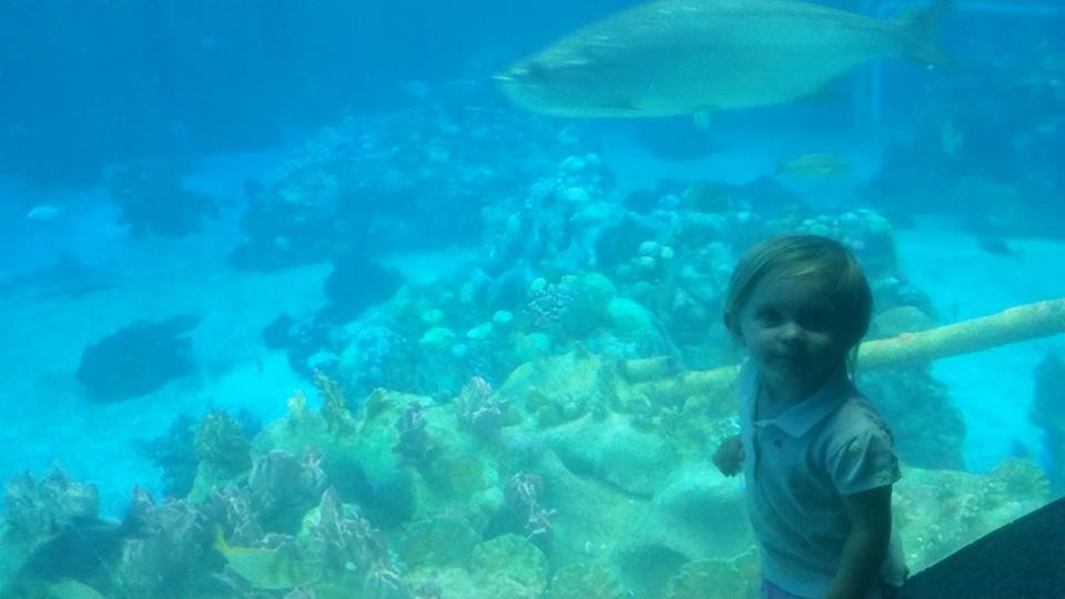 fishaquarium